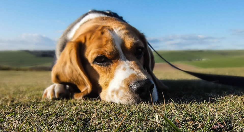 What pet owners need to know about emigrating from South Africa