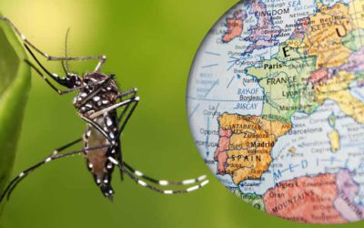 The Zika virus and Europe: is it something to be worried about?